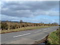 SP6409 : Trimmed hedge, Worminghall Road by Robin Webster