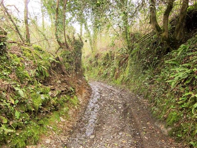 Green lane at Larcombe