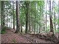 NN8667 : Woodland, Blair Atholl by Richard Webb