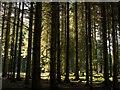 NT0074 : Sunlight at Beecraigs by Greg Fitchett