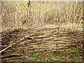 SX7557 : Laid hedge, Higher Beenleigh by Derek Harper