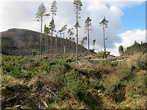 J3629 : Remnants of the now cut-over forest below Shan Slieve and Slievenamaddy by Eric Jones