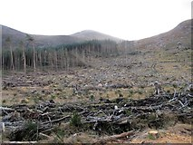 J3629 : Cut-over forest at the upper edge of Donard Wood by Eric Jones