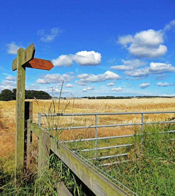 Footpath Waymarker