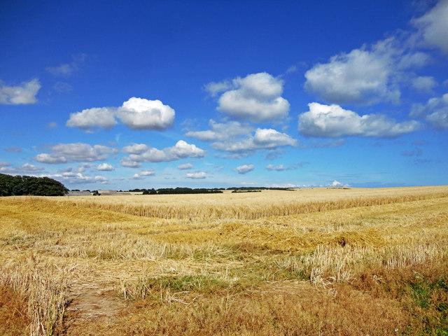 Farm land views