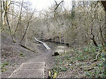 SJ9594 : Through Gower Hey Woods by Gerald England