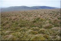 SD6782 : Moorland above Little Aygill by Bill Boaden