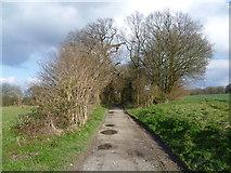 TQ6868 : Path in Cobham Park by Marathon