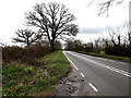 TG2504 : B1332 Bungay Road, Arminghall by Adrian Cable
