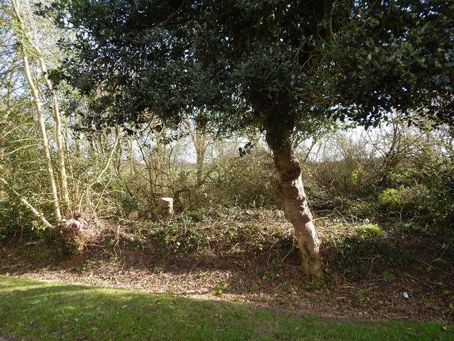 Tree, Priory Green