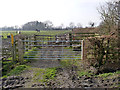 SK6024 : Cattle holding pen, near Wymeswold by Alan Murray-Rust