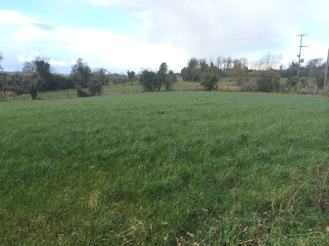 Field at Sheeptown