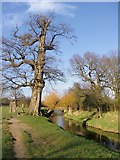 TQ2172 : Oak and willows by Beverley Brook, February 2014 by Stefan Czapski