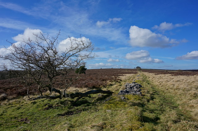 Moorland track  north of Great Longstone