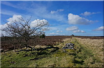SK1973 : Moorland track  north of Great Longstone by Peter Barr