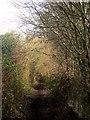 ST5982 : Community Forest Path near Patchway by Derek Harper