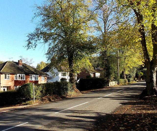Tree-lined Sandford Avenue, Church Stretton