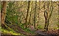 J3977 : Path, Redburn, Holywood - March 2014(1) by Albert Bridge