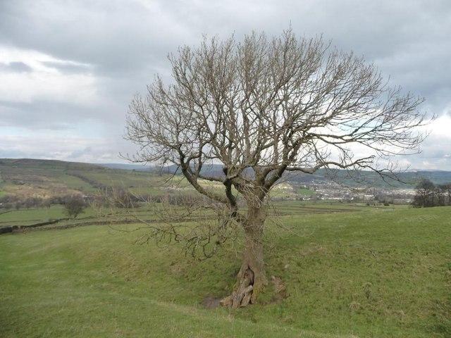 Winter tree, north of Brush Farm
