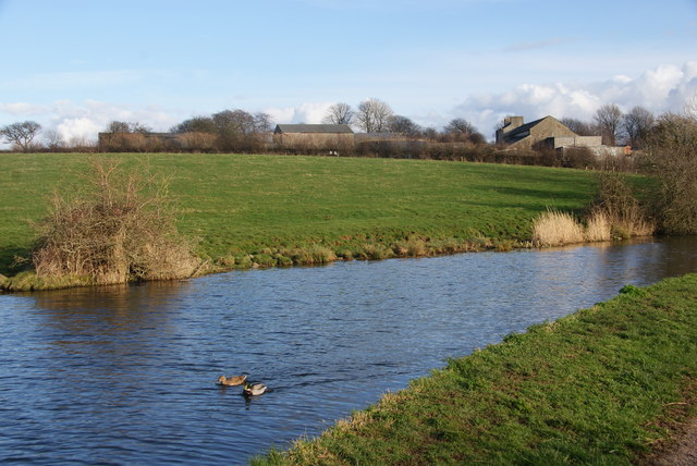 Ducks on the Lancaster Canal by Hammerton Hall