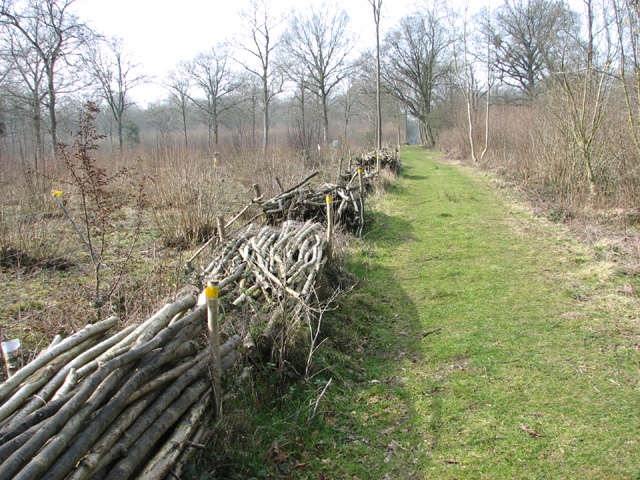 Path in Lower Wood Nature Reserve