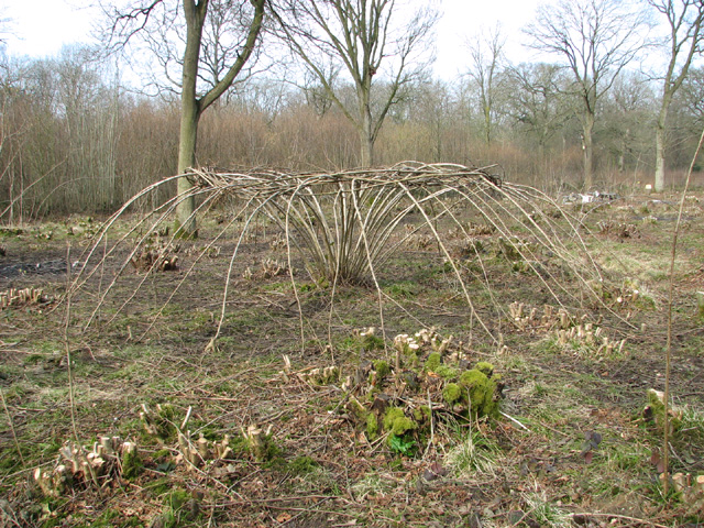 Ash-art in Lower Wood Nature Reserve