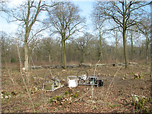 TM1497 : Coppicing in Lower Wood by Evelyn Simak