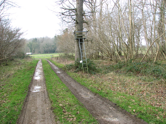 High seat beside track in Lower Wood