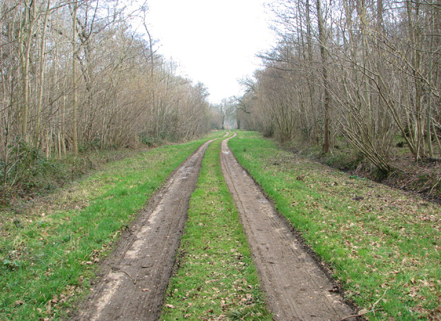 Track in Lower Wood