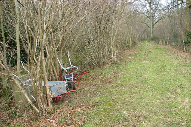 Path through Lower Wood
