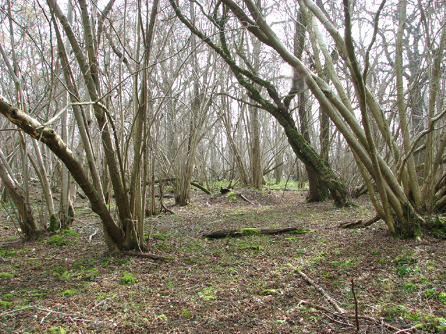 View into Lower Wood from the path
