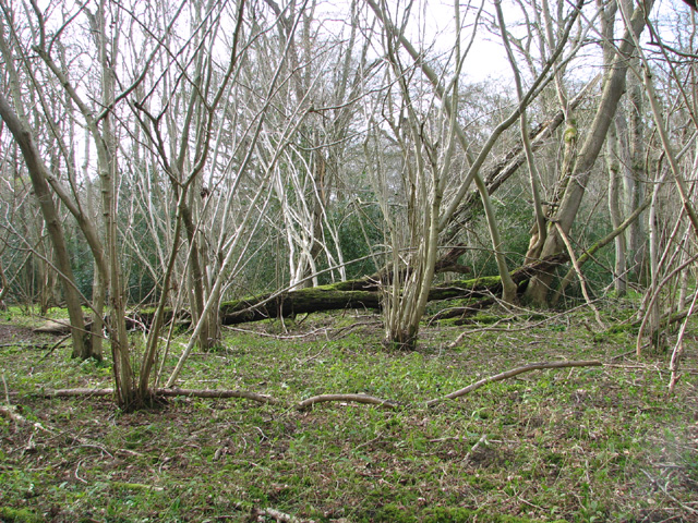 The north-eastern section of Lower Wood