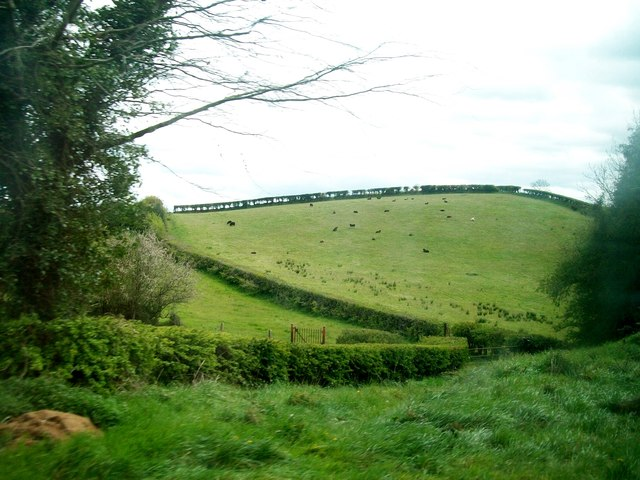 Hedge-bordered fields east of the A24