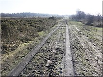 ST1116 : Track on Black Down Common by Roger Cornfoot