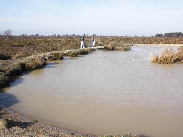 Pond on Black Down Common