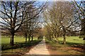 SK5339 : Tree-lined avenue in Wollaton Park by Graham Hogg