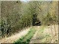 SD6838 : Mill Wood by Philip Platt