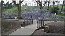NZ3955 : Dog walking in the park, Sunderland by Malc McDonald