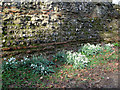 TL1306 : Snowdrops by a Roman wall by Stephen Craven