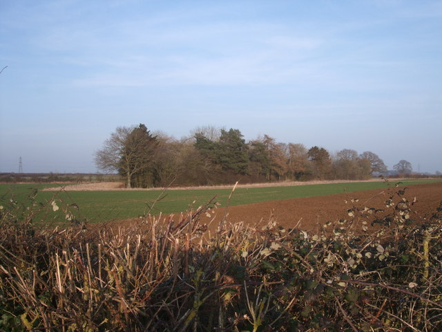 Copse, plough and hedgerow near Southrop