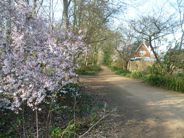 Path in the Waterhouse Woodland Garden, Bushy Park