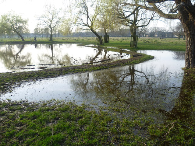 Hampton Hill Pond, Bushy Park