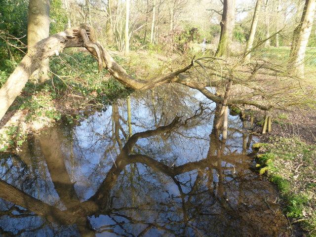 The Longford River in the Waterhouse Woodland Garden, Bushy Park
