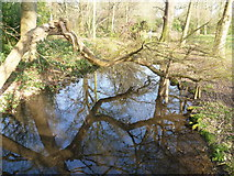TQ1469 : The Longford River in the Waterhouse Woodland Garden, Bushy Park by Marathon