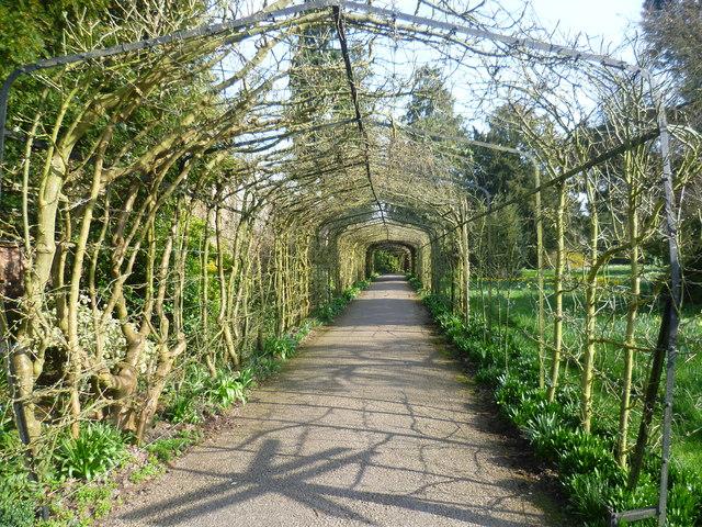 A pergola in Hampton Court Palace gardens