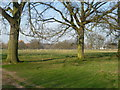 TQ1470 : View from the London LOOP in Bushy Park by Marathon