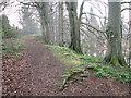 TG1812 : Drayton Green Lanes footpath by Evelyn Simak