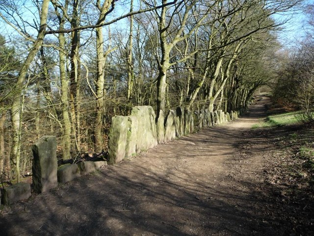 Chevin Forest Park [21]