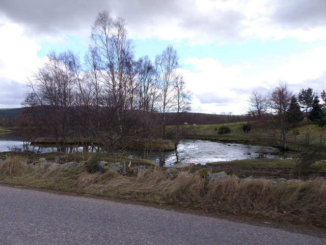 Islet in trout pond at Mill of Strachan