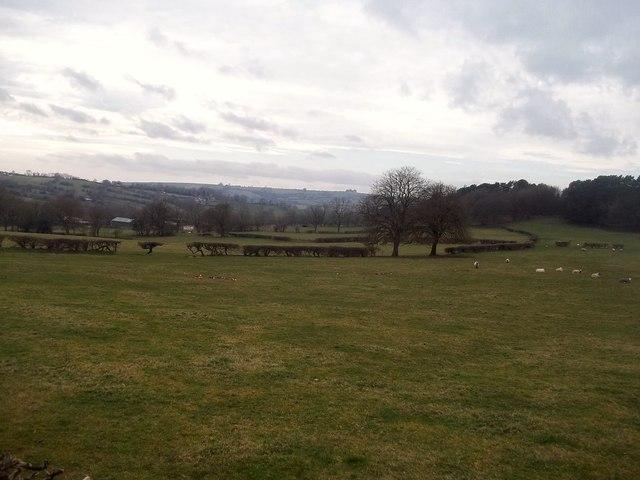 Grassland and Woodland near Carsington Water